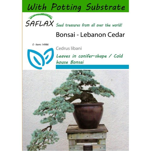 Saflax  - Bonsai - Lebanon Cedar - Cedrus Libani - 20 Seeds - with Potting Substrate for Better Cultivation
