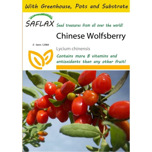 Saflax Potting Set - Chinese Wolfsberry - Lycium Chinensis - 200 Seeds - with Mini Greenhouse, Potting Substrate and 2 Pots