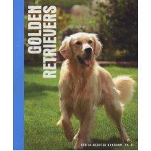 Animal Series Golden Retrievers