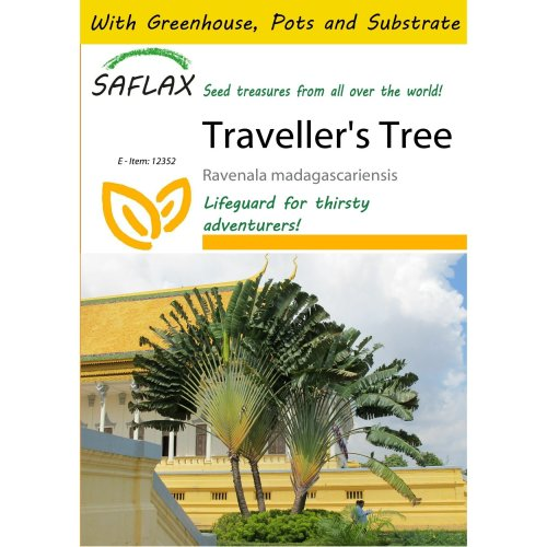 Saflax Potting Set - Traveller's Tree - Ravenala Madagascariensis - 8 Seeds - with Mini Greenhouse, Potting Substrate and 2 Pots