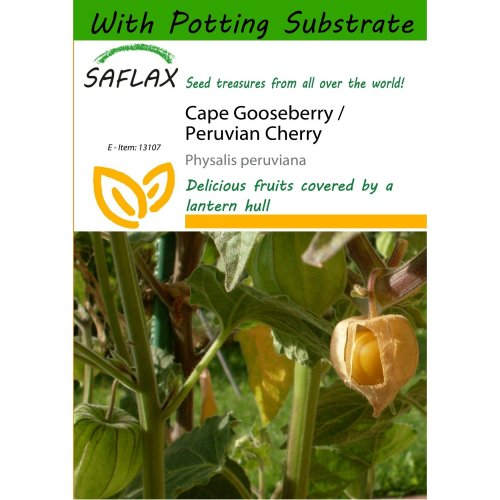 Saflax  - Cape Gooseberry / Peruvian Cherry - Physalis Peruviana - 100 Seeds - with Potting Substrate for Better Cultivation