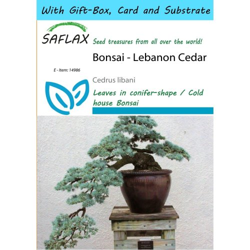 Saflax Gift Set - Bonsai - Lebanon Cedar - Cedrus Libani - 20 Seeds - with Gift Box, Card, Label and Potting Substrate