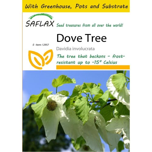 Saflax Potting Set - Dove Tree - Davidia Involucrata  - 1 Seeds - with Mini Greenhouse, Potting Substrate and 2 Pots