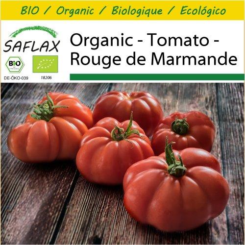 SAFLAX Potting Set - Organic - Tomato - Rouge de Marmande - 10 certified organic seeds  - Solanum