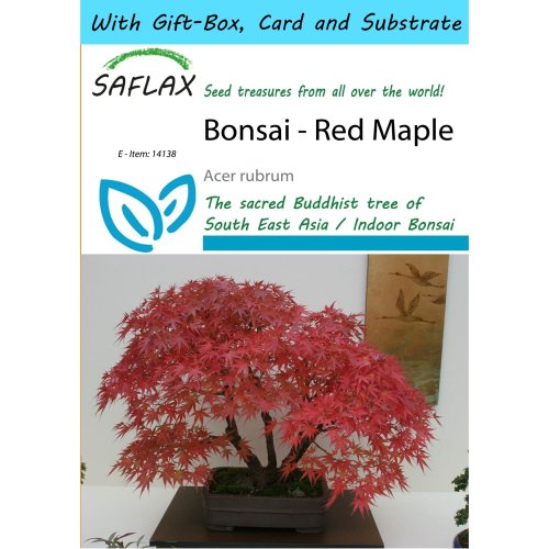 Saflax Gift Set - Bonsai - Red Maple - Acer Rubrum - 20 Seeds - with Gift Box, Card, Label and Potting Substrate