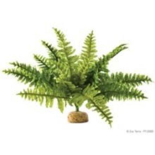 Exo Terra Boston Fern Rainforest Plant (medium)