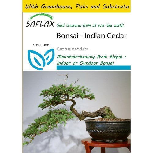 Saflax Potting Set - Bonsai - Indian Cedar - Cedrus Deodara - 35 Seeds - with Mini Greenhouse, Potting Substrate and 2 Pots