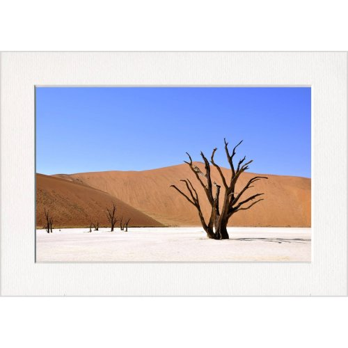 Desert Sand Tree Print in a Textured Card Picture Mount to put into your own frame